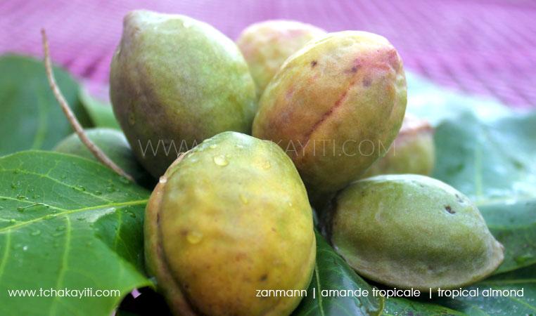 zanmann-almond-haiti-amande